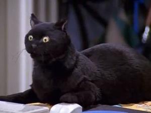 Photo of 90s teen comedy Sabrina the Teenage Witch gets dark reboot