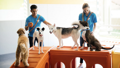Photo of Bring your furry friend to Dogtopia of South Chandler's Grand Opening with 88.7 The Pulse