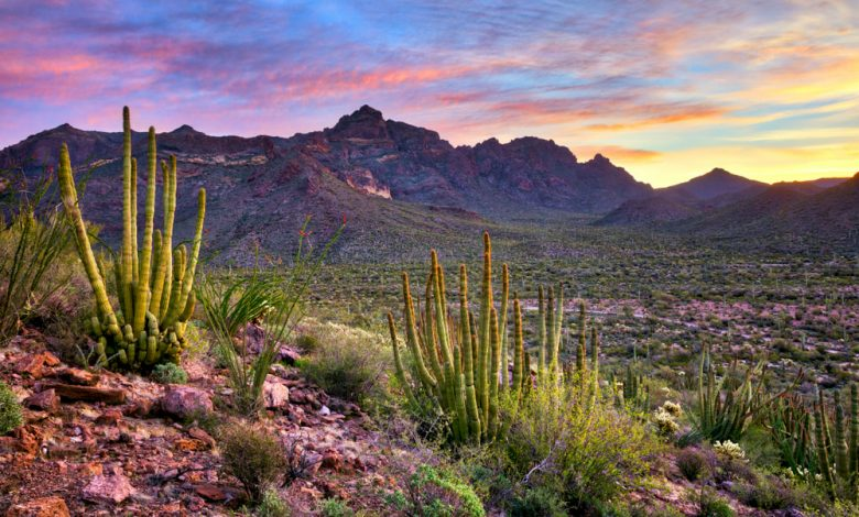 Photo of Arizona National Forests offer beautiful scenic options for outdoor activities