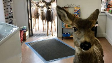 Photo of A deer walks into a store with four bucks and it gets better